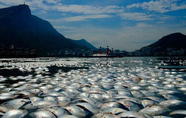 Fish-Brasil