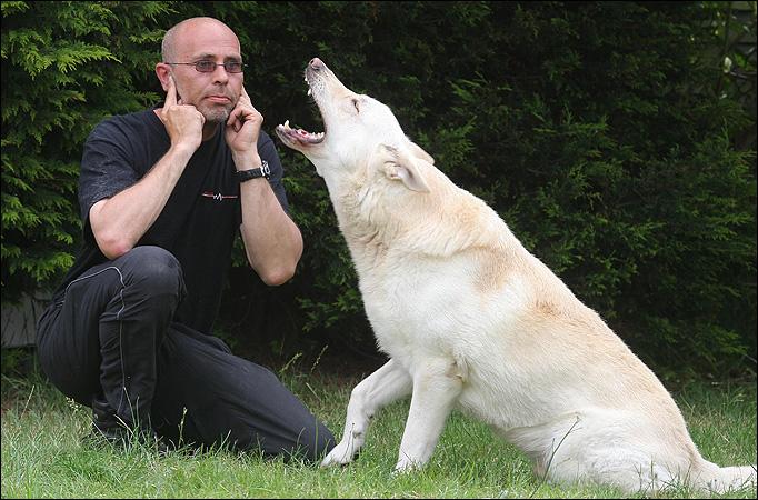 perro-muy-ladrador