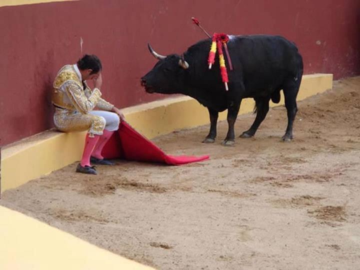 toro-matador