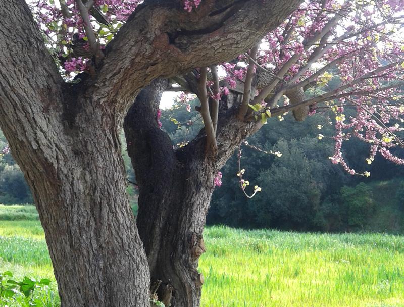 intro-primavera